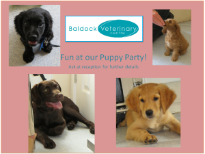 puppy party 030913